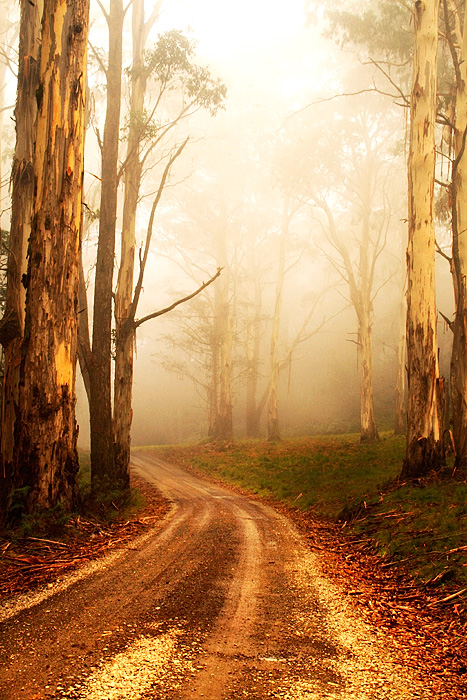 Macedon-foggy-trail-jpeg100